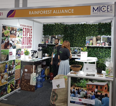 Mice19-Rainforest